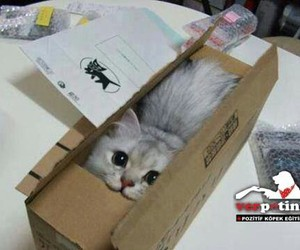box, cat, and cats image