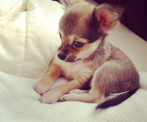 bed, luxury, and puppy image