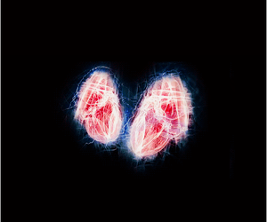 doctor who, the doctor, and two hearts image