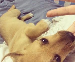 animal, bite, and dog image