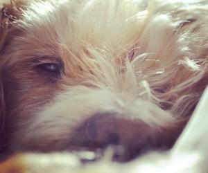 animal, dog, and sleep image