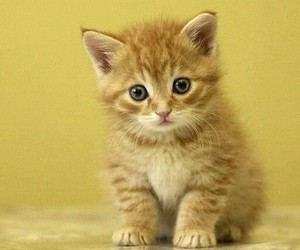 cat, lovely, and nice image