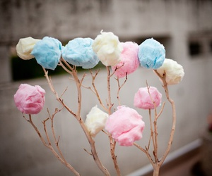 tree, candy, and cotton candy image