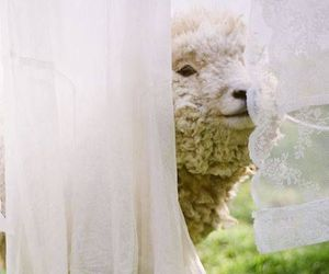 animals, clothes line, and sheep image