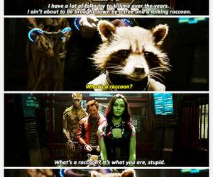 funny, raccoon, and Vin Diesel image