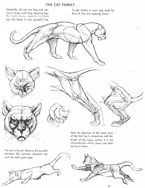 24 images about How To Draw Animals on We Heart It | See more about ...
