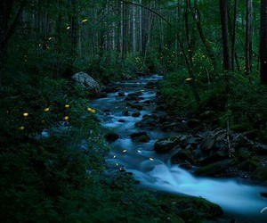 fireflies and photography image