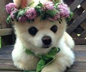 baby, dog, and flower image