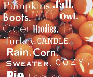 fall, pumpkin, and cozy image