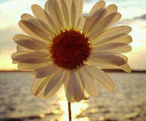 flowers, sun, and daisy image