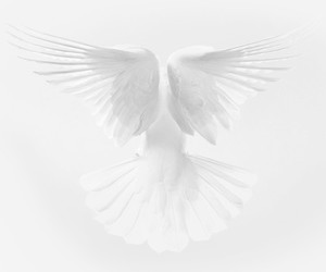 white, bird, and dove image