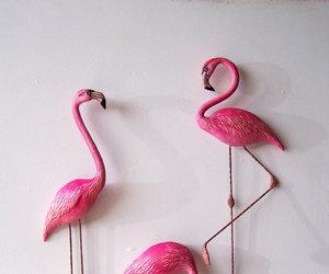 birds, flamingo, and photo image