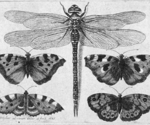 butterfly, animal, and black and white image