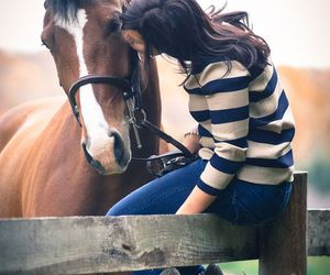 horse, love, and kiss image