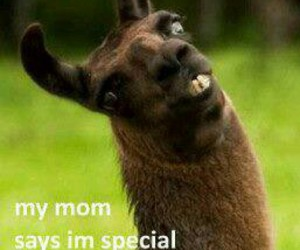 special, funny, and mom image