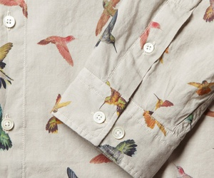 bird, fashion, and hummingbird image