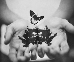 1, butterflies, and butterfly image
