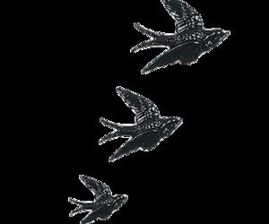 bird and transparent image