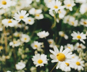 floral, flowers, and pretty image