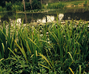 reeds and water image