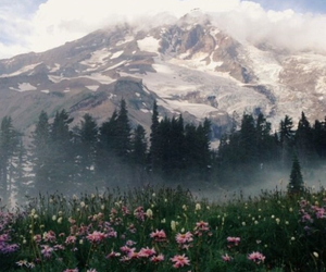 flowers, beautiful, and mountains image