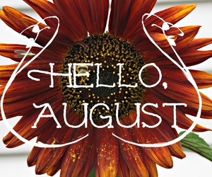 August, bee, and flower image