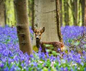 deer, belgium, and forest image