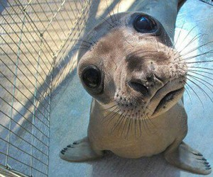 animal, seal, and funny image