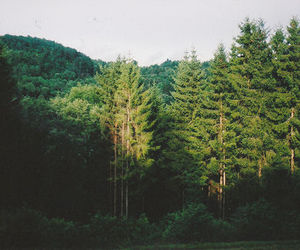 forest, tree, and indie image