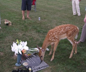 cute, deer, and sad image
