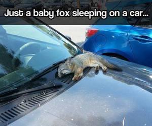 baby, car, and fox image