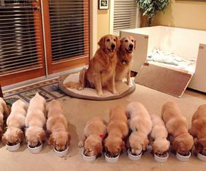 dogs, family, and puppies image