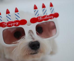 dog, cute, and happy birthday image