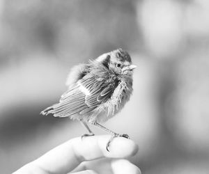 bird, cute, and black and white image