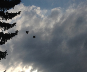 butterfly, beautifulsky, and friday image