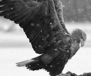 bird, black and white, and nature image