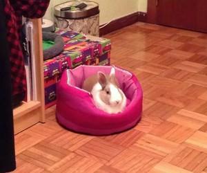 animal, bunnies, and dwarf image