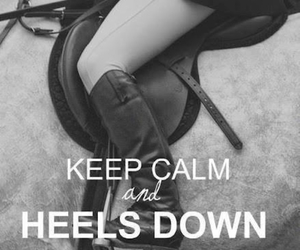 horse, keep calm, and equestrian image