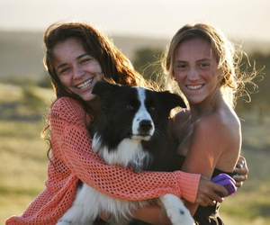 border collie, countryside, and dog image