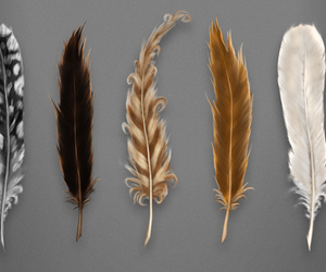 feathers, quill, and j.k. rowling image