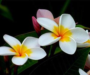 beau, beautiful, and fleur image