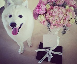 dog, chanel, and flowers image