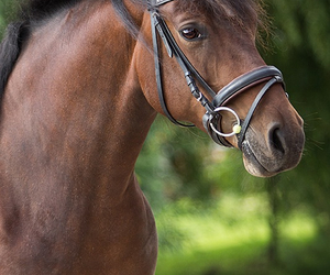 beautiful, brown, and horse image
