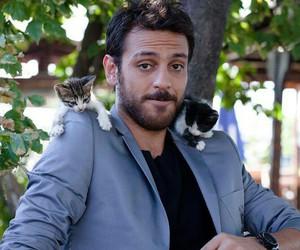 cat, cute, and ulan istanbul image