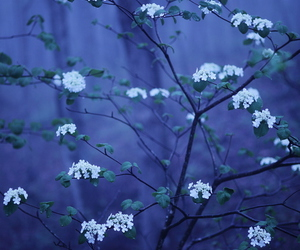 blue, forest, and plant image