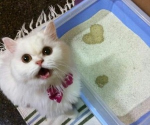 cat, heart, and funny image