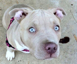 dog, cute, and eyes image
