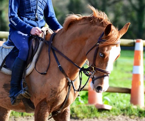 cheval, Dream, and equitation image