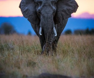 africa, colors, and elephant image