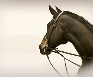 dressage, horse, and beautiful image
